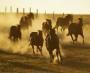 Horses: Reward, Shelter, Burden (Hadith No.2056)