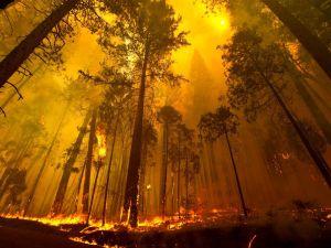 1377480422002-fire-gallery-3